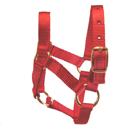 Weanling Red Miniature Donkey Halter For Sale