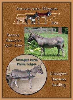 2011 Tennessee Donkey ASSocations High Point Harness Gelding and Reserve High Point Solid Color!