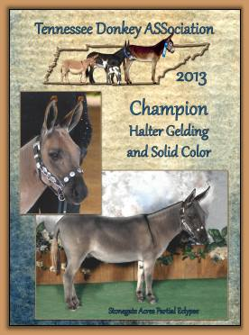 Mookie - 2013 Champion Solid Color Donkey
