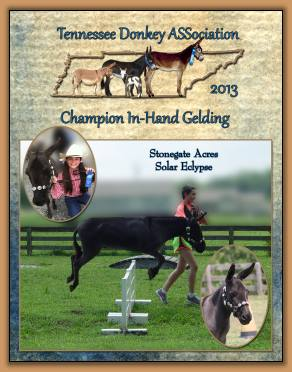 Solar - 2013 High Point Champion In-Hand Gelding
