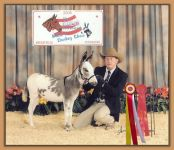 Itsy Bitsy Puzzles, 2008 Reserve ACOSA Champion Jennet